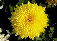 痔疮可以治好?西藏阜康医生告诉你:假的,菊花宝典也很难根除!